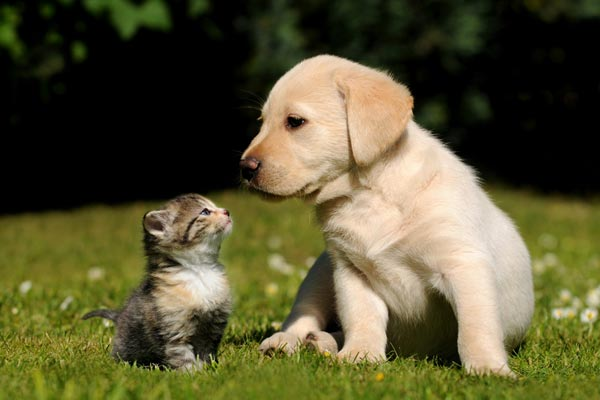 cute dog and kitten sitted in park and facing each other