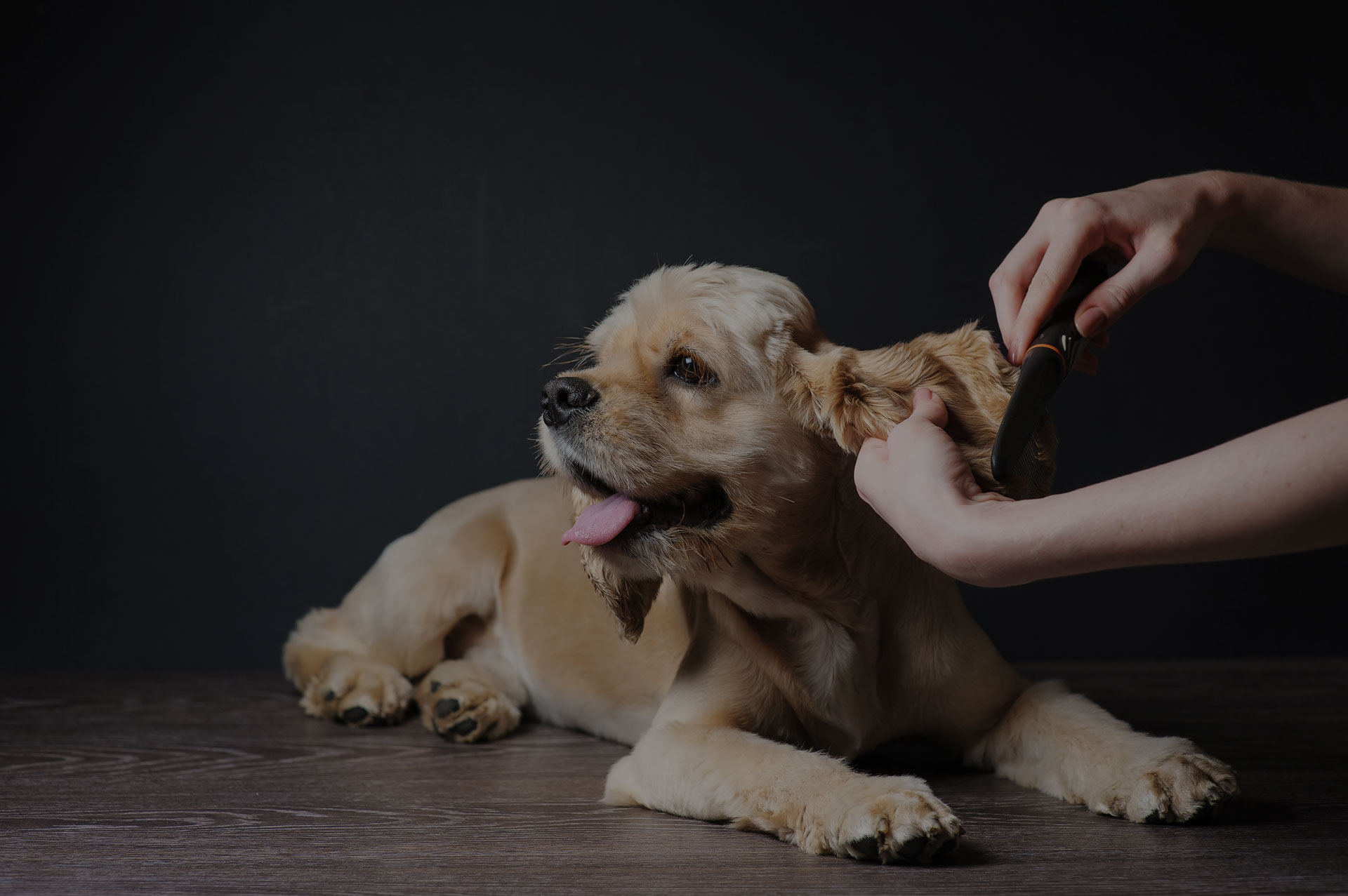 lady straightening dog ear hair